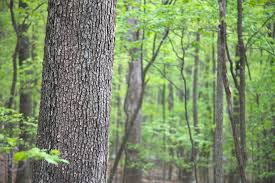 Ohio forest images Forest industry brings green to ohio 39 s economy details in new jpg