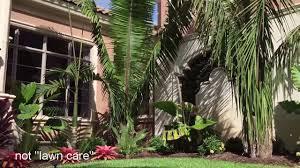native plants fort myers seabreeze landscape services ft myers florida youtube