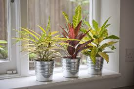 Home Plant Decor by 10 Best House Plants Easy Plants To Care For