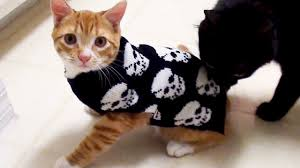 kitten halloween costume u003d freak out youtube