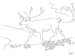 cartoon reindeer coloring free printable coloring pages