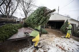 photos santa s elves deliver cheer trees minnesota