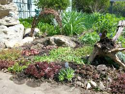 50 best rock garden ideas images on pinterest backyard ideas
