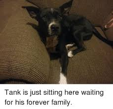 Just Sitting Here Meme - tank is just sitting here waiting for his forever family family