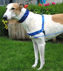 Comfort Flex Dog Harness No Pull Harnesses Actually All Harnesses Harming Our Dogs