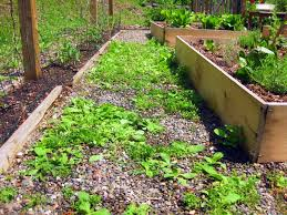 Types Of Vegetable Gardening by Weeds In Paths Use Vinegar Not Roundup
