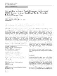 Blood Brain Barrier Anatomy High And Low Molecular Weight Fluorescein Isothiocyanate Fitc