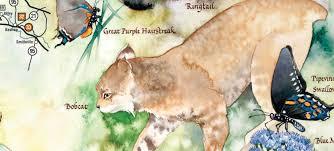 great texas wildlife trails wildlife texas parks u0026 wildlife