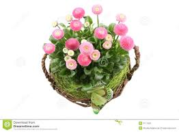 Spring Decoration by Spring Decoration Royalty Free Stock Photos Image 2171928