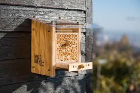 balcony bees in switzerland moms tots zurich