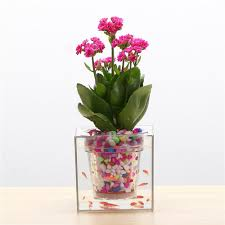 self watering self watering planter aquarium u2013 homedeur com