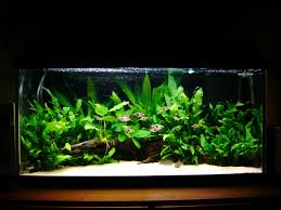Plants For Aquascaping A General Guide To Plant Maintenance Uk Aquatic Plant Society