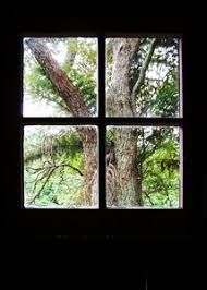 free stock photos rgbstock free stock images tree out the