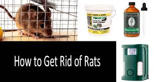 How Do I Get Rid Of Rabbits In My Backyard How To Get Rid Of Rats In Your House And Yard Killing Vs