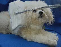 Halo For Blind Dogs Blind Visually Impaired Dogs Now Have Aid With Muffin U0027s Halo