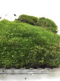 wool moss terrarium vivarium end 10 19 2018 11 15 am