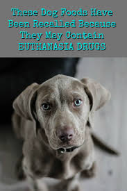 pet euthanasia recall these dog foods may contain euthanasia drugs the organic