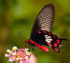 butterfly park nvecofarm