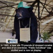 Bear Cocaine Meme - thug life thug life