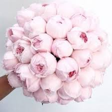 peonies delivery peonies flower delivery in santa clarita celebrate flowers and