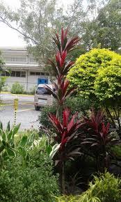 houseplants grow wild in the philippines the common room