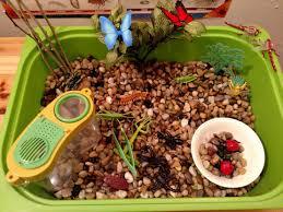 insect sensory tub u0026 activities preschool u0026 kindergarten safari