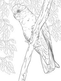parrots coloring pages macaws that you can print pictrues free printable parrot