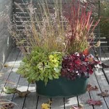 herbstbepflanzung balkon herbstbepflanzung für balkon und terrasse mein schöner garten