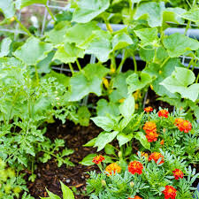 how to start a vegetable garden planet natural