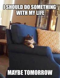 Relax Meme - relax cat meme justpost virtually entertaining