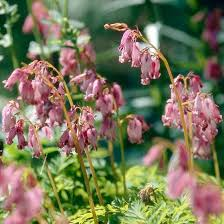 Types Of Hoes For Gardening - 190 best perennials shade images on pinterest shade plants