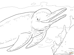 amazon river dolphin boto coloring page free printable coloring