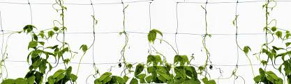 garden design garden design with questions on climbing plants and