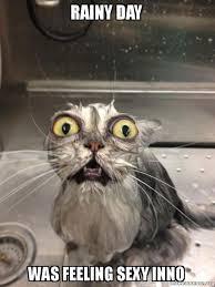 rainy day was feeling sexy inno cat bath make a meme