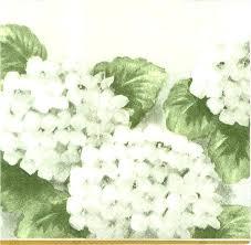 bulk hydrangeas white hydrangeas followfirefish
