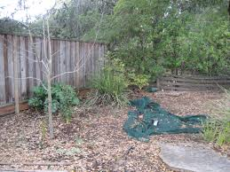 taj mahal wichata knockoff backyard chickens