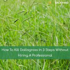 How To Cut Weeds In Backyard How To Kill Dallisgrass In 3 Steps Without Hiring A Professional