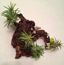 Unusual Wall Art by Air Plants And Moss Wall Garden Living Wall Art A Unique