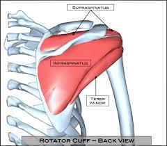 Anatomy Of Rotator Cuff Rotator Cuff Tear Austin Shoulder Surgery Austin Shoulder