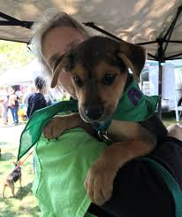 chester co pet food pantry for rescues and owners