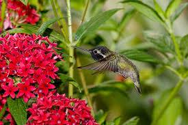 Hummingbird On A Flower - hummingbird san diego zoo animals u0026 plants