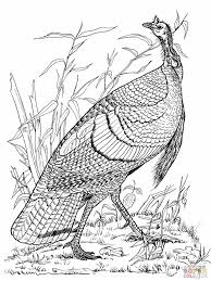 81 turkeys images wild turkey drawings