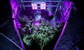 Plant Lights How To Choose by How To Pick The Right Size Grow Box U2022 Green Rush Daily