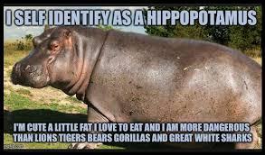 Hippo Memes - coolest 27 hippo meme wallpaper site wallpaper site