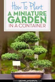 22 best grow plants in pots images on pinterest plants in pots