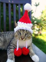 keen knitter comes up with purr fect christmas present hats for