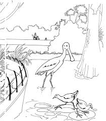 spoonbill bird zoo coloring free printable coloring pages