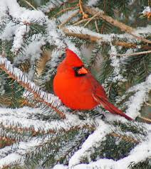 New Jersey Birds images What you need to know about birds in winter earthshare new jersey jpg