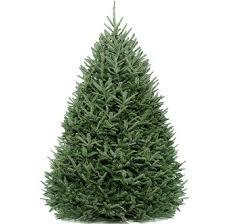 real mini christmas tree with lights real tree christmas tree packages rent a christmas