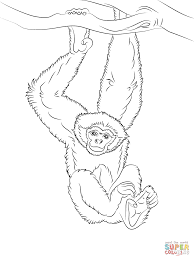gibbon hanging from a tree coloring page free printable coloring
